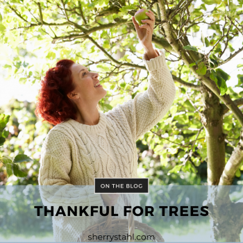 thankful for trees