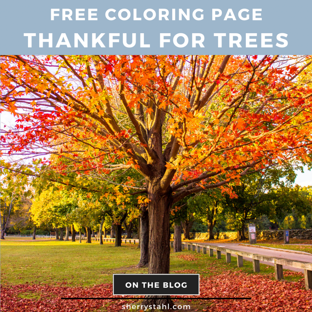 COLOURING SHEET THANKFUL FOR THE TREES